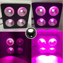 Venta al por mayor de Regulable 4COB 1200W Full Spectrum LED Lámpara de luz para plantas de plantas de semillero Lámparas de interior