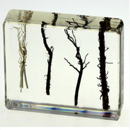 Wholesale education systems resale online - Root systems Specimen Resin Embedded Plant Root Science Teaching Kits Transparent Mouse Paperweight New Type Student Learning Education Tool