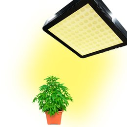 $enCountryForm.capitalKeyWord NZ - high quality low price two years guarantee 300w led grow light led pant light for home tent plant