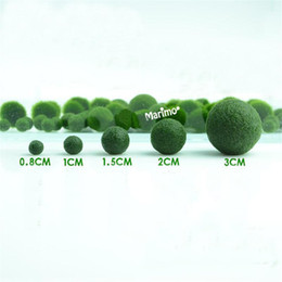 Wholesale Japan Marimo Moss Ball Aegagropila linnaei Syn Cladophora aegagropila Aquarium Aquatic Plant for Terrarium