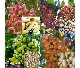 Nut tree Pistachios semillas Chinese Pistacia semillas de árboles frutales al aire libre raras plantas tropicales semillas de bonsai 5 pcs / bolsa Envío gratis en venta