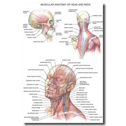 China Human Anatomy Head And Neck Wall Art Canvas Posters Prints Painting Body Map Pictures For Medical Education Home Decor Artwork cheap traditional body art suppliers
