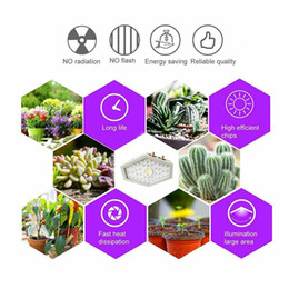 $enCountryForm.capitalKeyWord Australia - LED Grow Light 1000W Full Spectrum LED COB Growing Lamp For greenhouse Indoor Plant Bloom Veg