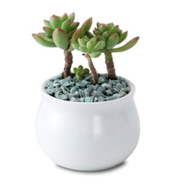 mini ceramic flower pots NZ - DHL White Ceramic Small succulent Flowerpot mini Table Plant Pot Culture Flower Pot Home Decoration Bonsai Pots For Green Plants