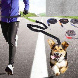 Chirstmas Led Lights Australia - Pet Dog Leash Running Jogging Puppy Cat Lead Collar Adjustable Sport Walking Leash
