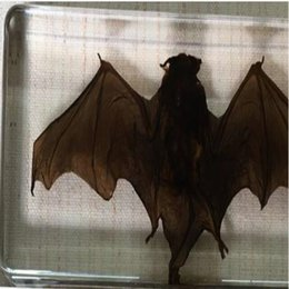 Black Blocks Canada - Brown Bat Science Specimen Acrylic Resin Embedded Bat Block Transparent Mouse Paperweight Kids New Biology Kits Learning&Teaching Appliance