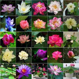 10 Pz / borsa Fiore di Loto Lotus Bonsai Piante Acquatiche Ciotola Loto Ninfea Bonsai Pianta Nymphaea Perenne Per Giardino Domestico in Offerta