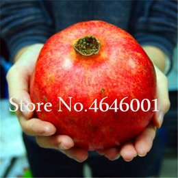 very rare seeds NZ - Imported Perennial Fruit Tree Rare Giant Pomegranate bonsai 50 pcs Fruits Red Flower plants seeds Very Delicious for Home Garden