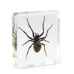 $enCountryForm.capitalKeyWord NZ - Gray Ghost Spider Specimens Science&Discovery Kits Resin Embedded Spider Transparent Mouse Paperweight Kids New Type Learning&Education Toys