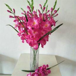 Hibiscus Flowers Nz Buy New Hibiscus Flowers Online From Best