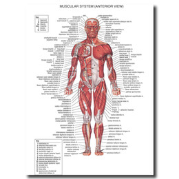 Chinese  Human Anatomy Muscles System Wall Art Posters Prints Painting Body Map Pictures For Medical Education Home Decor Artwork manufacturers