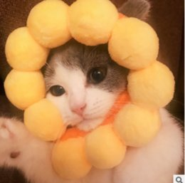 Take picTures online shopping - Young Cat Takes Pictures of Cute Cat Yellow Circle Pet Sunflower Cat Headgear Pet Clothes Costume