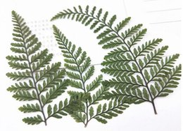 Groihandel 60pcs getrocknete gepresste Grün Dauallia Bullata Farnlaub Pflanze Herbarium für Schmuck Postkarte Einladungs-Karte Telefon-Kasten DIY