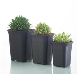 shop succulents plant flower seeds uk succulents plant flower rh uk dhgate com