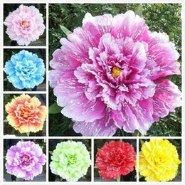 Fancy dress style online shopping - Multi Size Retro Chinese Peony Flower Umbrella Props Dance Performance Wedding Decoration Photograph Fancy Dress Umbrellas sy5 kk