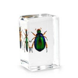 resin mice UK - Red Leg Scarab Beetle Specimen Acrylic Resin Embedded Beetle Paperweight Transparent Mouse Kids Science Learning&Discovery Education Kits