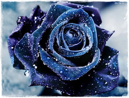 rare beautiful flowers 2019 - Fast Shipping Rare Beautiful Navy Blue Rose Flower Seeds *100 Pieces Seeds Per Package* New Arrival Two Colors Charming