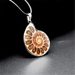 Natural Ammonite Fossil Pendant Australia - Vintage Natural Stone Ammonite Fossils Seashell Pendant Animal Necklace Costume Jewelry for Men Women 1 Pc