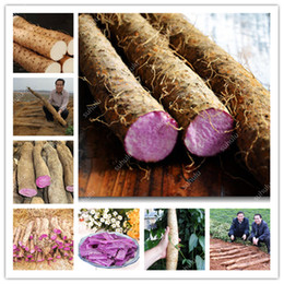 Discount chinese seeds vegetable Hot 200 Pcs Chinese Yam Bonsai seeds Rhizoma Dioscoreae Plants Growing For Home Garden Medicinal Vegetables Bonsai Shipp