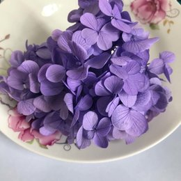 real hydrangea flowers Australia - 20g lot ,Long Time Lasting Natural Fresh Preserved Flowers Dried Hydrangea Flower Head For IY Real Eternal Life Flowers Material T191102