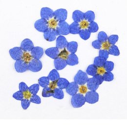Flower Fillers online shopping - Dont Forget Me Cheap Flowers For Diy Filler Material Press Flower Free Shipment Q190522