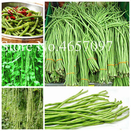 Discount chinese seeds vegetable 50 pcs  bag Chinese Long Bean seeds Vigna Unguiculata Plant Long Podded Cowpea Tasty Snake Bean Vegetable Garden Long Be