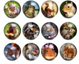 $enCountryForm.capitalKeyWord Australia - 12pcs lot Cute Squirrel Theme Glass Charms 18mm Snap Button Jewelry For 20mm Snaps Bracelet Snap Jewelry KZ0813 jewelry making