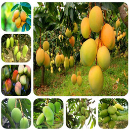 Imported seeds 1pcs 100% true Mango plants Very Delicious healthy green Fruit bonsai Very Easy Grow For Home Garden plant Free Shipping on Sale