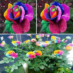 New Beautiful Romantic 500Pcs Rainbow Rose Seeds Multi colorato perenne casa giardino decorazione fragrante