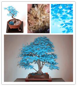 Graines de bonsaïs. 10PC rare graine d'érable bleu ciel. Plantes de balcon