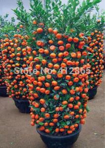 30 pezzi / borsa vendita superiore di alta qualità bonsai semi di albero di frutta dolce arancione albero semi bio spedizione gratuita per la casa giardino