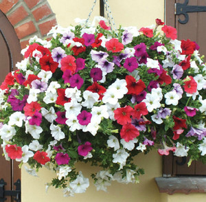 wholesale different seeds Petunia hanging petunia petals flower seeds plant seeds - 220 seeds garden petunia