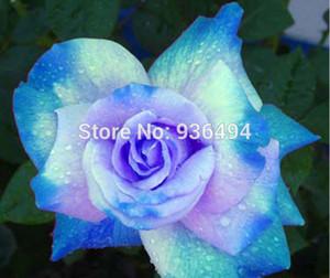 Graine de fleur, 200 graines de roses bleu ciel rares PC, les plus belles plantes, graines de paysage en pot