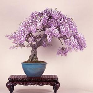 Pretty Bonsai Little Plant, mini-graines de cerisier rose en pot 30 pièces