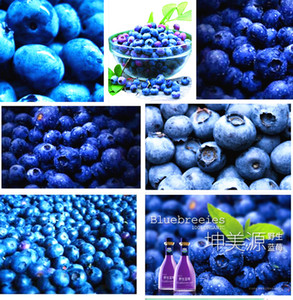 200 pcs Blueberry seed Fruit seeds Potted blueberry seed Free shipping