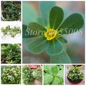 Bonsai mixte Mexique Portulaca Plante extérieure Mousse Rose-fleur légumes aux herbes Planta pour jardin Décor 1000 pcs / paquet Graines Vente Hot