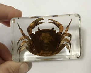 Crabe Mode d'insectes Taxidermie Embedding récent paperweight