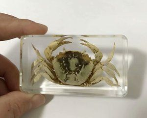 Moda Crab Insect Taxidermia Embedding fresco peso de papel