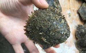 HOT Mar Akoya pérolas de água salgada 6-7mm natural de água salgada da pérola redonda ostra festa de aniversário de presente extravagante
