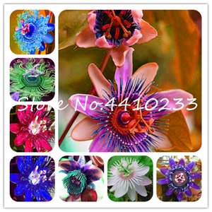 20 Pcs Bonsai Passion Flower, Passiflora Incarnata Certified Pure Live, Tropical Flower Tropical Native Potted Plant For Home Garden seeds