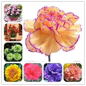 200 Pcs Seeds Hot Selling Carnation Plant Perennial Flowers Bonsai Potted Garden Dianthus Caryophyllus Flower Planting Easy To Grow
