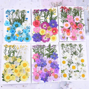 small Dried Flowers Pressed Flowers DIY Preserved Flower Epoxy phone shell dry flower material Embossed face petal makeup