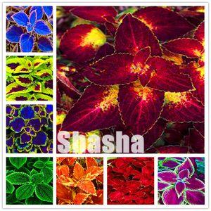 Bitki bonsai çiçek Saksı hediye, 200pcs / Çanta Coleus blumei bonsai Nadir Coleus blumei Gökkuşağı bonsai