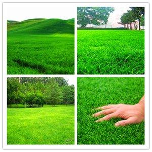 Gran promoción 100 piezas de alta calidad de musgo césped césped bonsai para mini jardín casero fresco verde suave corredor césped césped plantas de bonsai