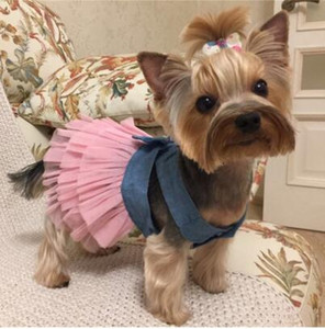 Robe d'été pour chien Pet vêtements pour chiens Robe de mariée jupe chiot Vêtements printemps Mode Jean Toutous XS-L