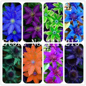 200 pc colore misto Clematis bonsai semi di piante Clematis Hybridas Hanging Bonsai fiori perenni Fiori piante rampicanti per la casa giardino