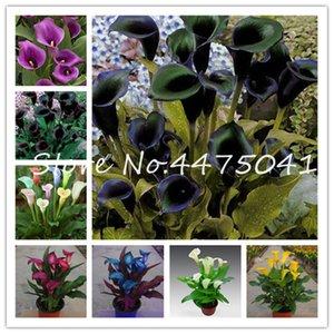 100Pcs Красочные семена растений Калла Бонсай Flower Rare Герметичный Балкон Завод Калла Can поглощения излучения Mixed Colors Акции Бонсай