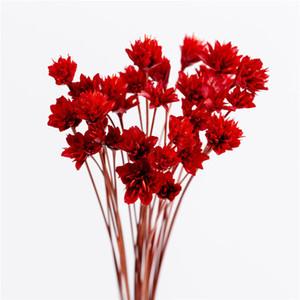 Fleurs artificielles mini Marguerite séchée Fleur Chrysanthème Sauvage home hotel Fleurs décoratives Photographie Props 7 couleurs 30pcs / lot