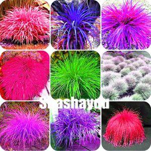 Bonsai (Festuca glauca) daimi dayanıklı süs güzel çim Bonsai saksı ekici çanta Yulaf Çim Bitkiler tohum başına 500 adet