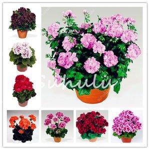 Meistverkauft! 100 Stück Echte Bunte Geranium Pflanzensamen Bonsai Günstige Pelargonium Staudengarten-Blumen-Peltatum Bonsai Töpfe Geranium